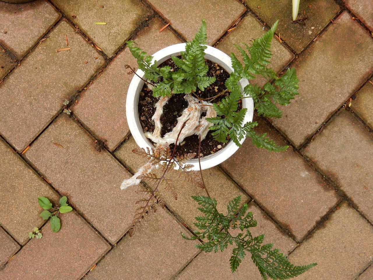室内の植物を外に出してシャワー_c0025115_21070961.jpg