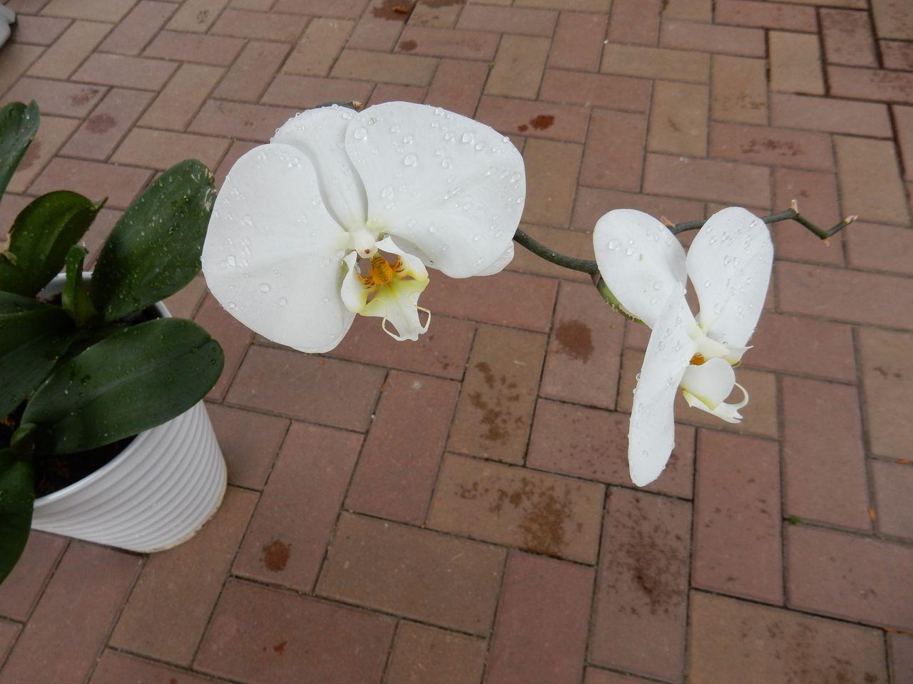 室内の植物を外に出してシャワー_c0025115_21071612.jpg