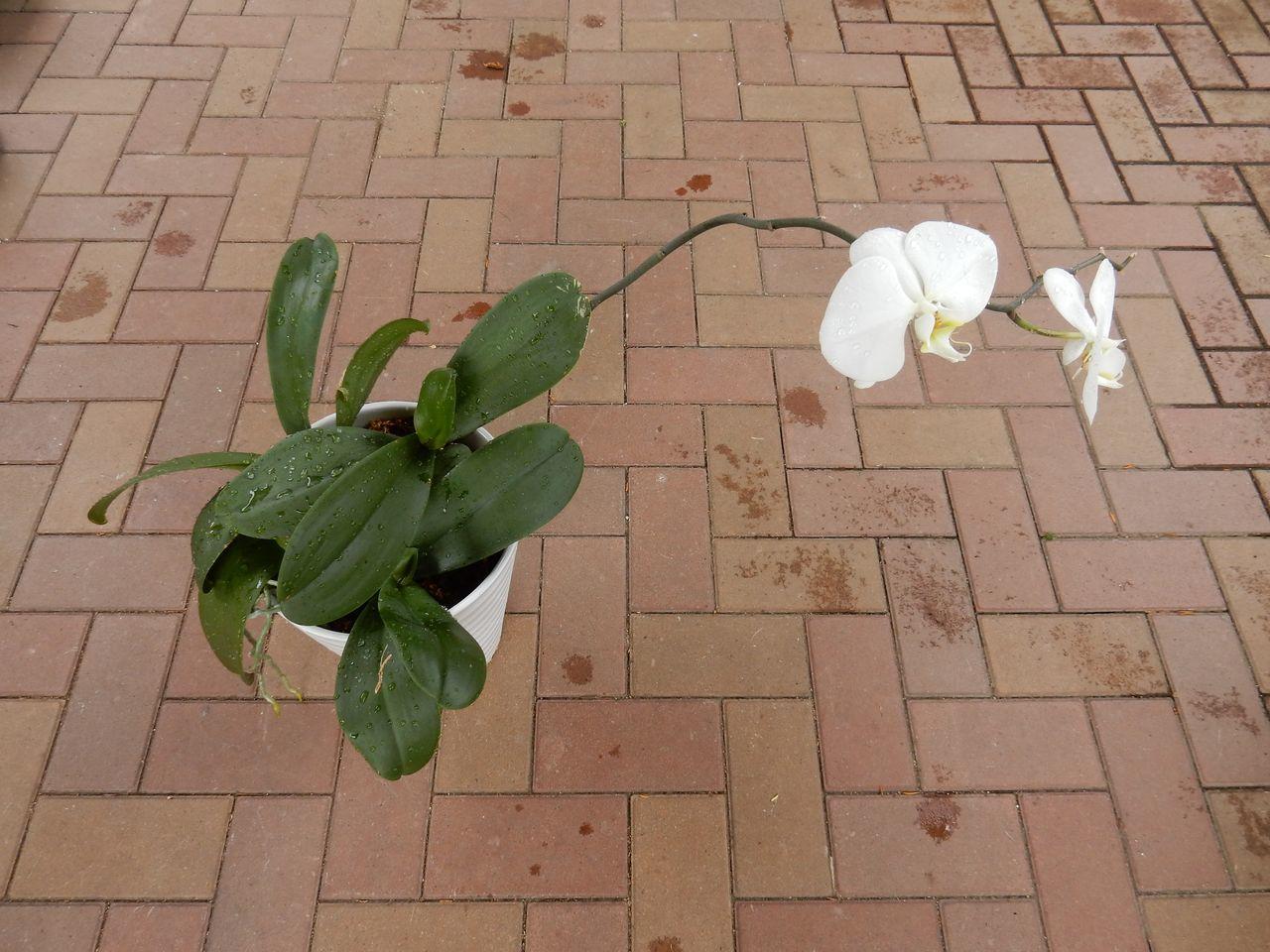室内の植物を外に出してシャワー_c0025115_21072739.jpg