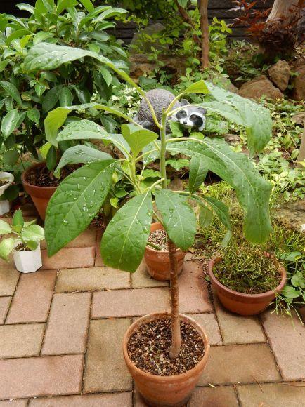 室内の植物を外に出してシャワー_c0025115_21075177.jpg