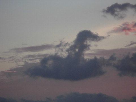 プードル犬に見える空の雲の形_e0310216_00023777.jpg