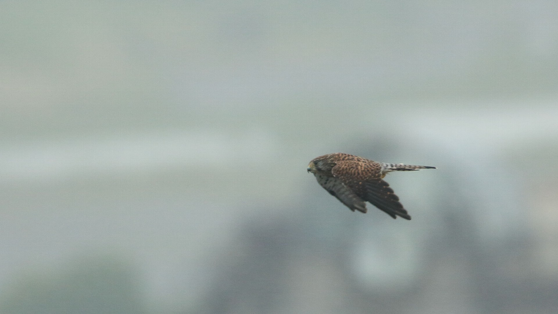 【速報】今季初めてチョウゲンボウ幼鳥がお向かいのマンションへ_f0105570_09525158.jpg