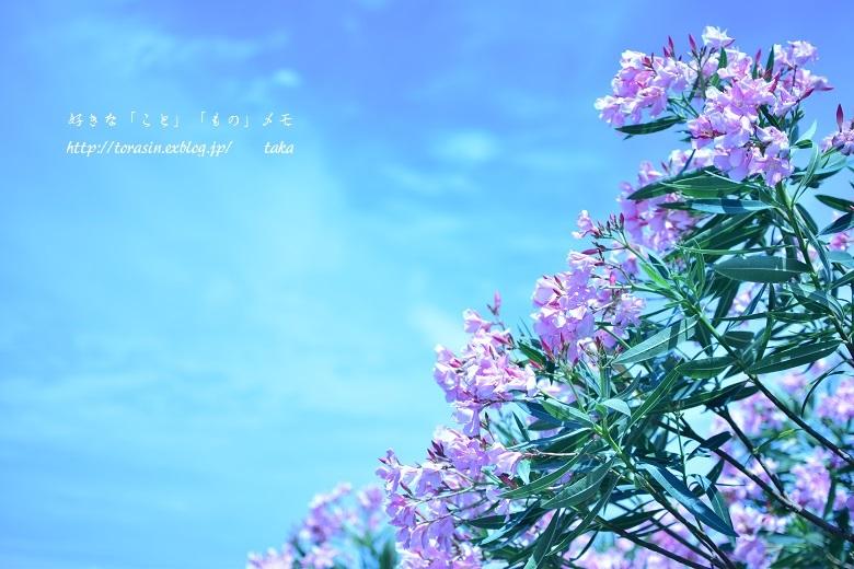 Mikurajima ♪_d0342382_19194710.jpg