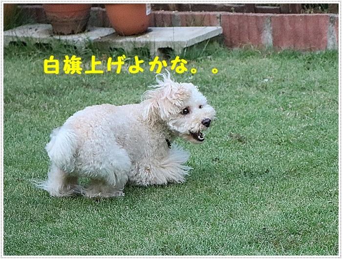 b0175688_00343045.jpg