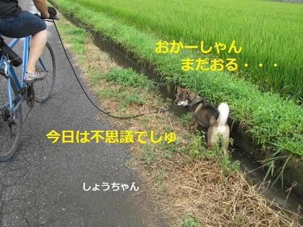 f0143123_09134643.jpg