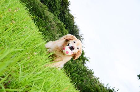 お散歩さんの行き先の決め方_f0044853_1144740.jpg