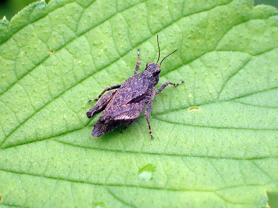 マルコの虫たち_f0131669_20353170.jpg