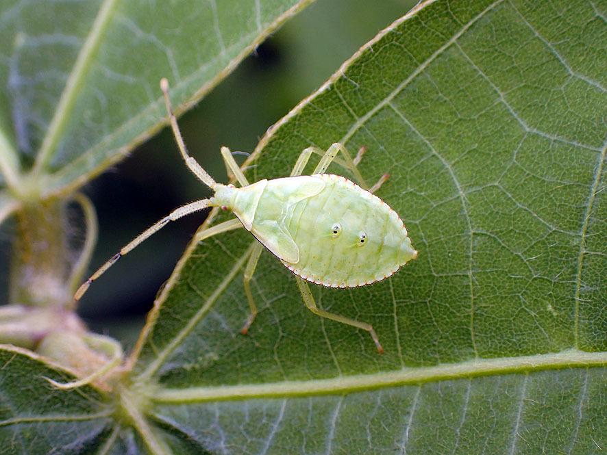 マルコの虫たち_f0131669_20464457.jpg