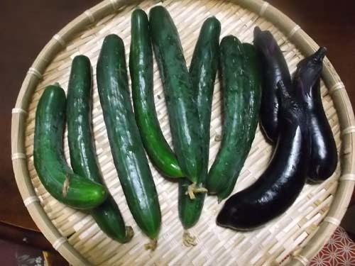 孫たちが勉強していた&嫁農園の野菜_f0019498_22534849.jpg