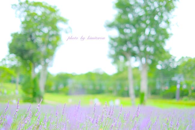b0280329_20081439.jpg