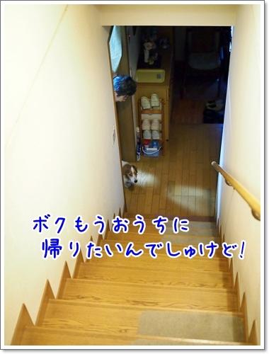 d0013149_00462732.jpg