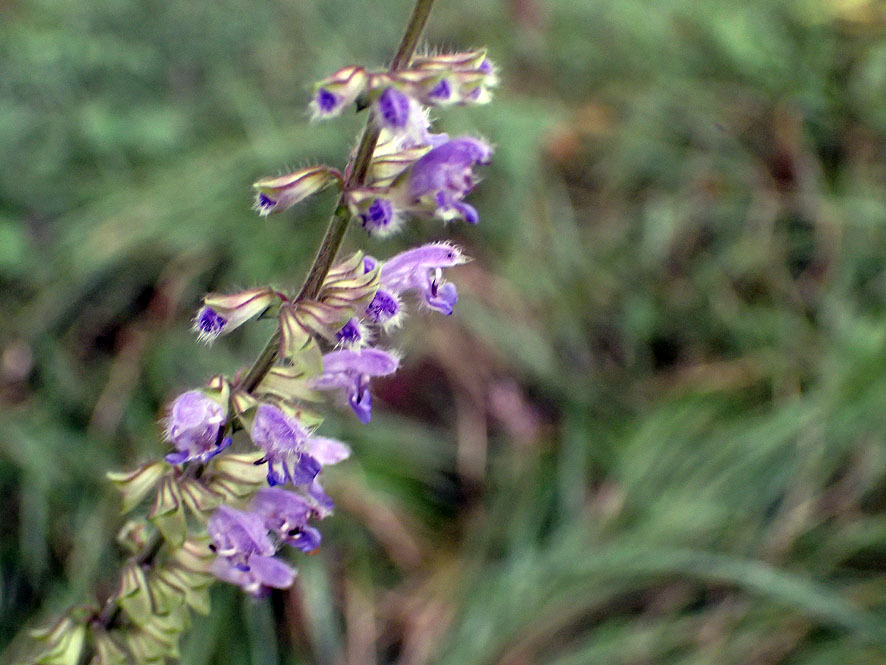 斜面林の花_f0131669_19483458.jpg