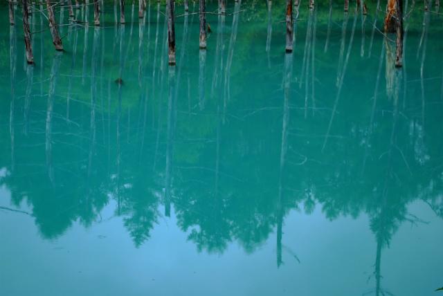 青い池_a0230872_23574826.jpg