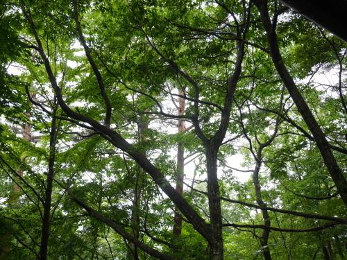軽井沢での夏のひとコマ_c0352090_18233727.jpg