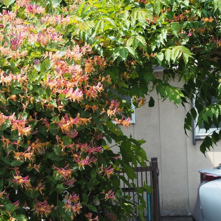 秘密の花園風_a0292194_145487.jpg