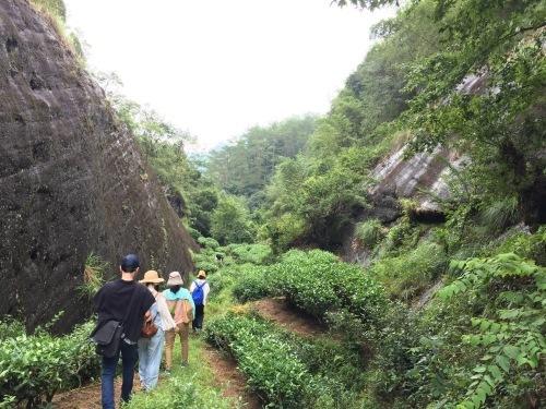 中国武夷山に行ってきました_d0293004_17285841.jpg
