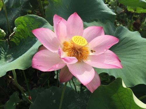 中国武夷山に行ってきました_d0293004_21004473.jpg