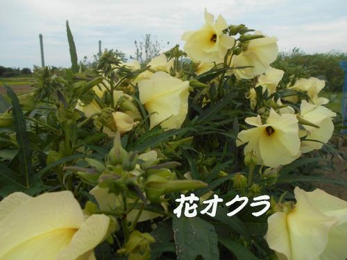 d0095910_18480732.jpg
