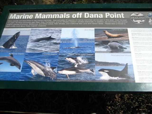Dana Point Becah Trail_f0300716_08355021.jpg