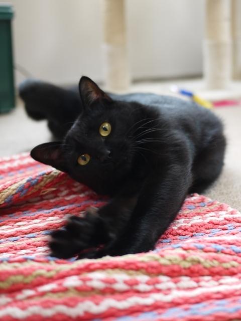 猫のお留守番 ミミちゃん編。_a0143140_21374474.jpg