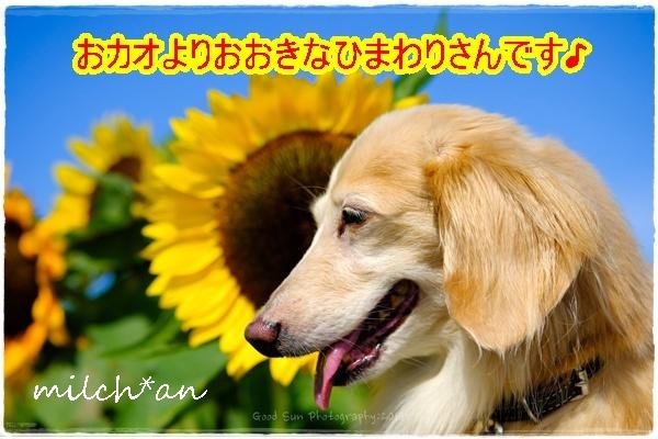 b0115642_21553255.jpg
