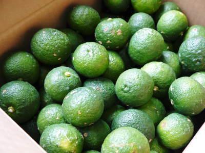 香り高き柚子(ゆず) 令和元年の青柚子は9月中旬より出荷予定!今のうち青唐辛子を購入しておいて下さい_a0254656_17000973.jpg