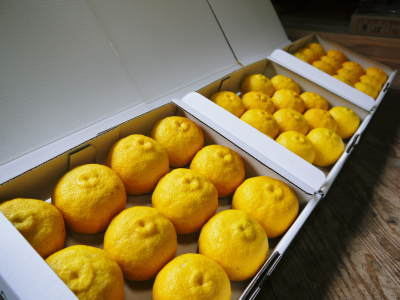 香り高き柚子(ゆず) 令和元年の青柚子は9月中旬より出荷予定!今のうち青唐辛子を購入しておいて下さい_a0254656_17062189.jpg