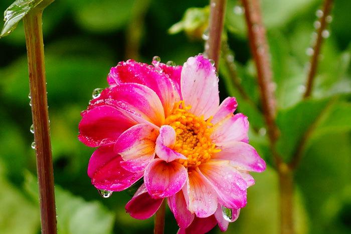 花と雫_d0162994_09322212.jpg