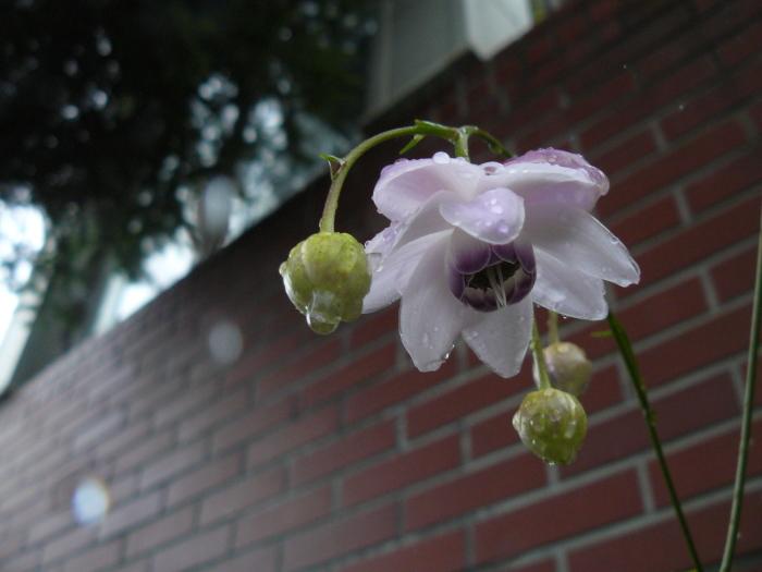 花と雫_d0162994_09325635.jpg