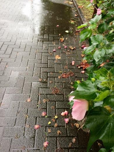 今日は雨 - Less is more