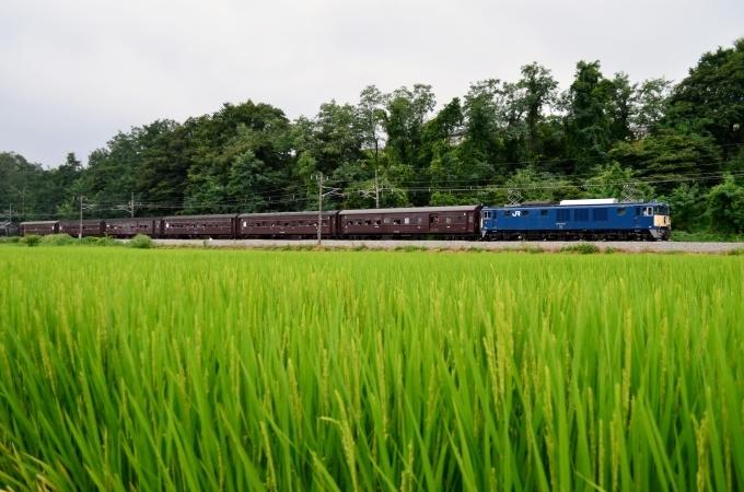 夏草の匂いと懐かしい客車列車 - 鉄道日記コム