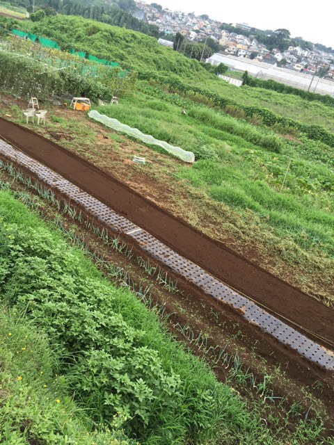 今朝より葉物野菜の種 直播です 雨を利用します_c0222448_12120060.jpg