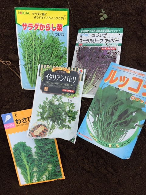 今朝より葉物野菜の種 直播です 雨を利用します_c0222448_12121485.jpg