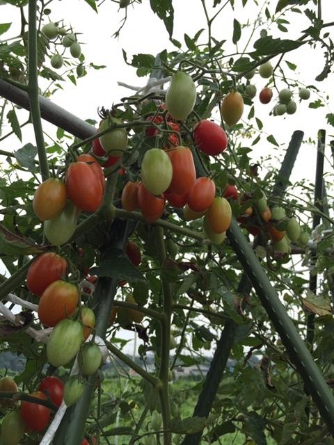 今朝より葉物野菜の種 直播です 雨を利用します_c0222448_12122954.jpg