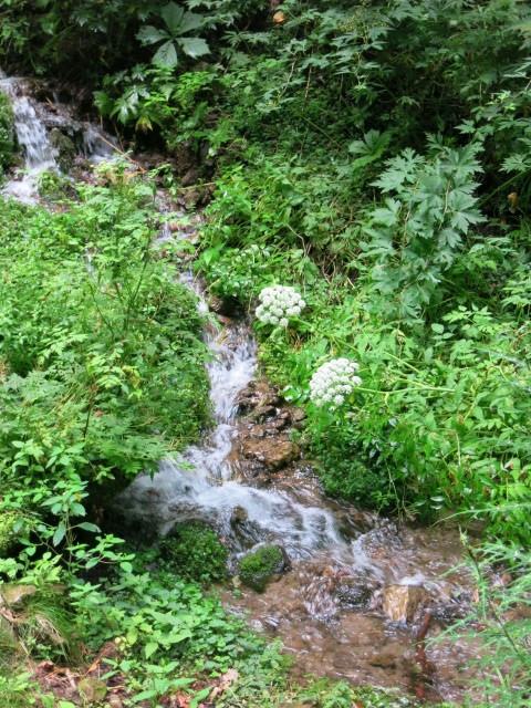 嬬恋・たまだれの滝で涼を感じる♪_f0236260_17270879.jpg