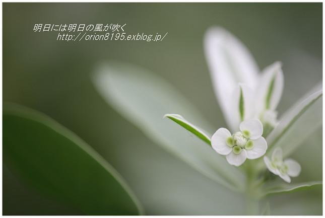f0361079_18260704.jpg