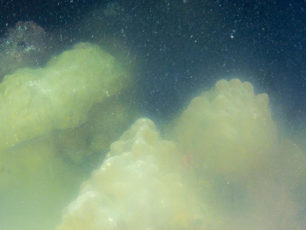 8/13 サンゴ産卵調査_a0010095_2051662.jpg