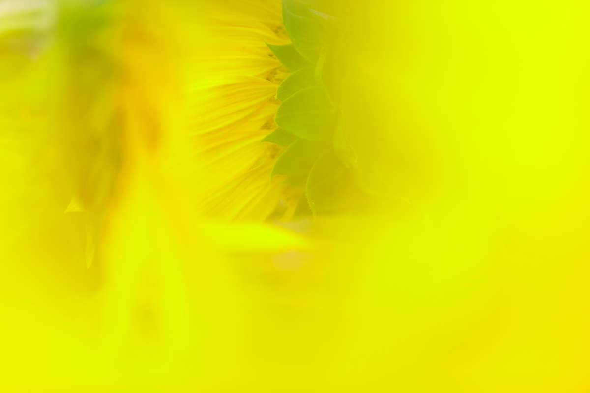 f0345910_11221266.jpg