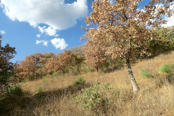森の木も枯れる水不足、イタリア ウンブリア_f0234936_6442761.jpg