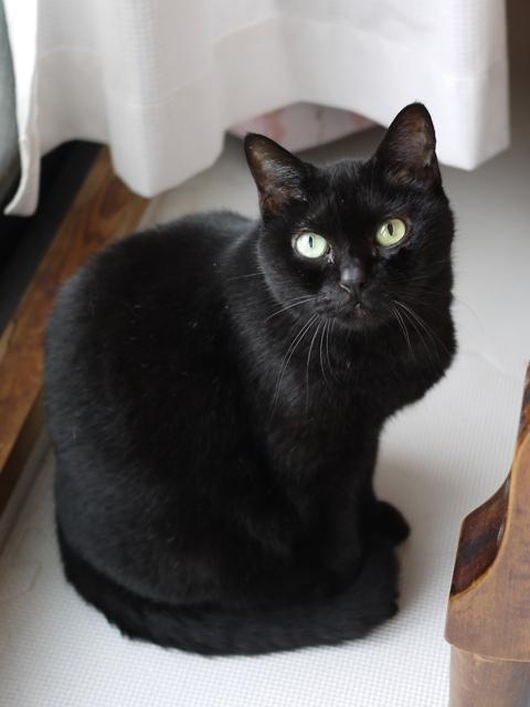 猫のお留守番 カーンちゃん編。_a0143140_23401124.jpg