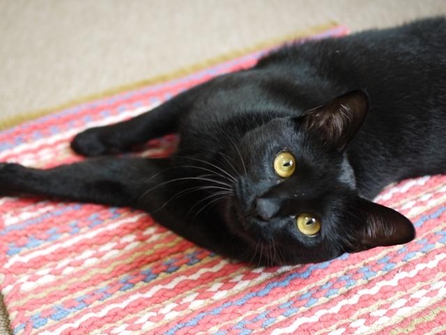 猫のお留守番 ミミちゃん編。_a0143140_23435709.jpg