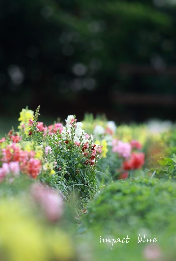 アイガモ公園の花壇にて(*^^*)_a0355908_13524871.jpg