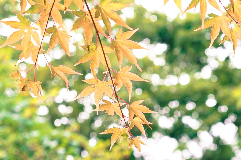 秋の準備三様_c0220824_19492026.jpg