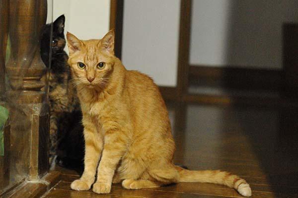 猫の膀胱炎を電話サポートの獣医さんに相談 &膀胱炎に効果のあるご飯「ロイヤルカナン PHコントロール」について種類が多いのでサポートに質問してみた_b0162726_05284829.jpg