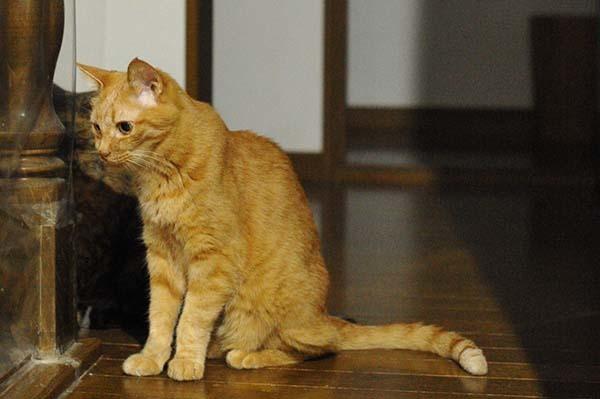 猫の膀胱炎を電話サポートの獣医さんに相談 &膀胱炎に効果のあるご飯「ロイヤルカナン PHコントロール」について種類が多いのでサポートに質問してみた_b0162726_05290865.jpg