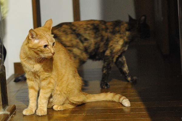 猫の膀胱炎を電話サポートの獣医さんに相談 &膀胱炎に効果のあるご飯「ロイヤルカナン PHコントロール」について種類が多いのでサポートに質問してみた_b0162726_05294628.jpg