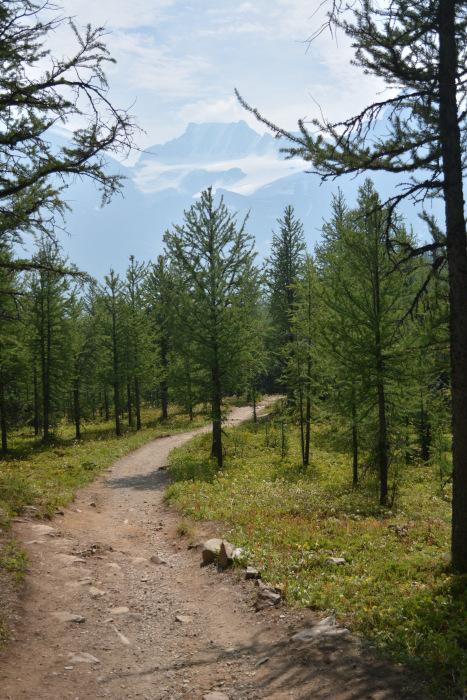 歩いておきたい ロッキー定番ハイキング 『ラーチバレー』_d0112928_07245552.jpg