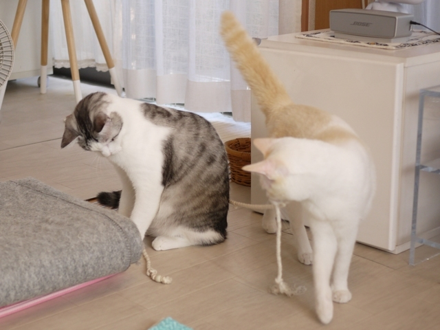 猫のお留守番 ニーナちゃんムーくん編。_a0143140_23194330.jpg