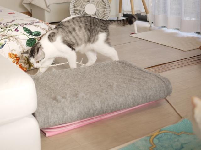 猫のお留守番 ニーナちゃんムーくん編。_a0143140_23205944.jpg