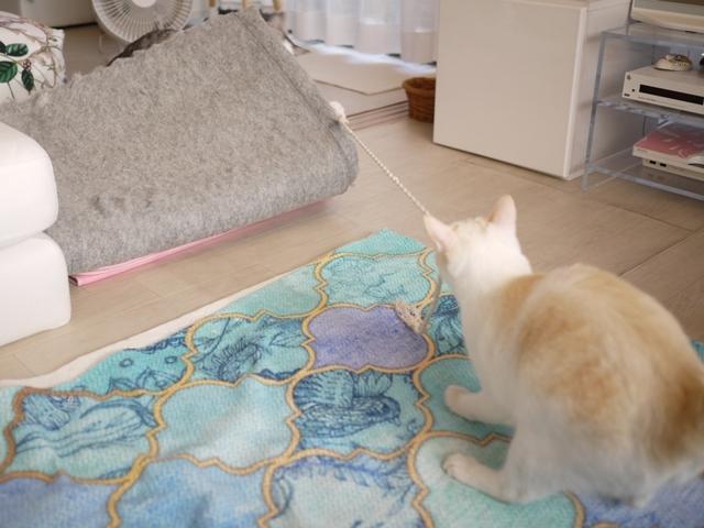 猫のお留守番 ニーナちゃんムーくん編。_a0143140_23225587.jpg